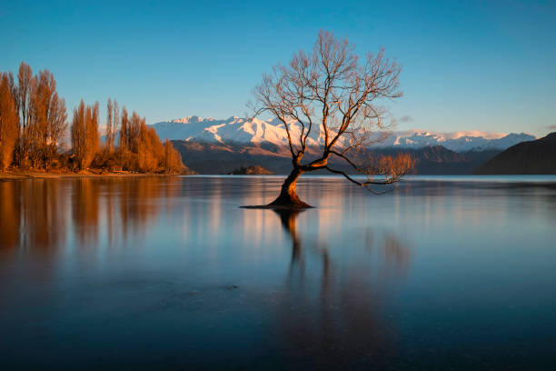 Dawn And The Tree At Lake Wanaka In New Zealand stock photo