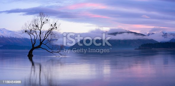 Dawn approaches the most famous tree in the world, on the shores of Lake Wanaka, New Zealand.