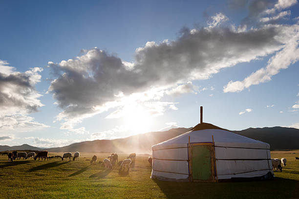 Dawn in a Ger. Mongolia The sun rises in the Orkhon Valley while lambs graze freely independent mongolia stock pictures, royalty-free photos & images