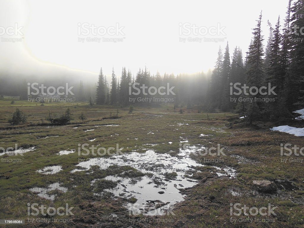 Dawn in a North Cascades Meadow royalty-free stock photo