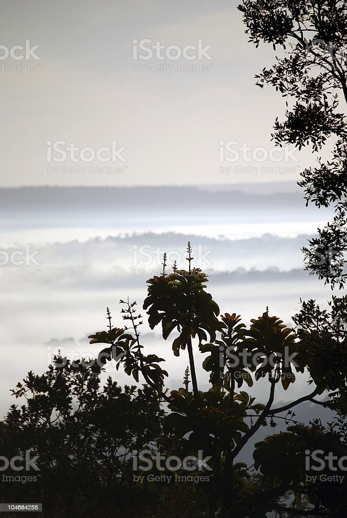 Dawn in Amazon rainforest royalty-free stock photo