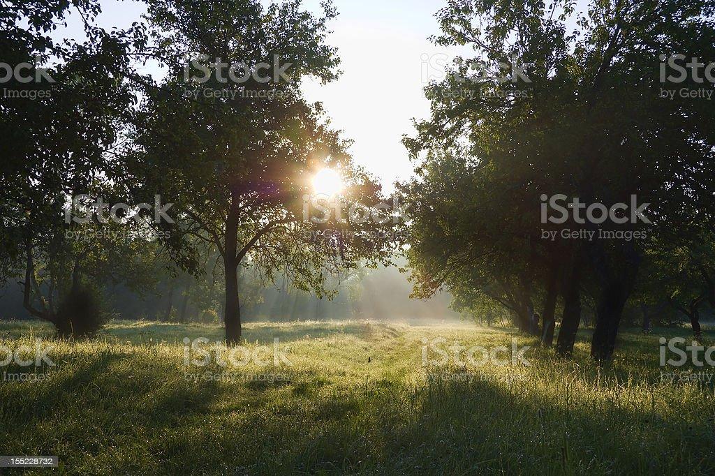 Dawn in the apple garden of Eden royalty-free stock photo