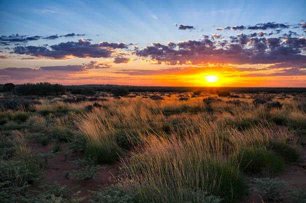 Dawn In The Australian Outback Dawn In The Australian Outback outback stock pictures, royalty-free photos & images