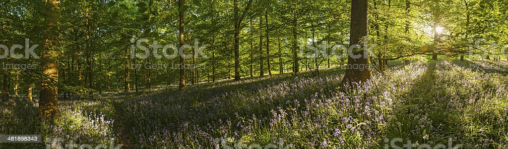 Dawn in the forest summer sunlight idyllic wildflower woodland panorama stock photo