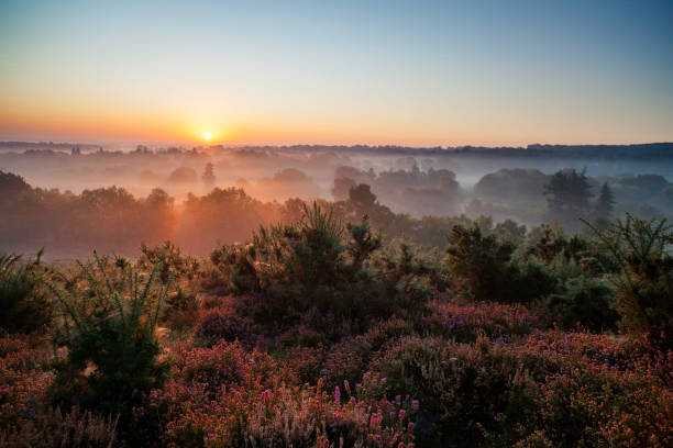 Dawn In The Surrey Hills A spectacular sunrise lights up the heather-clad Surrey Hills. southeast england stock pictures, royalty-free photos & images