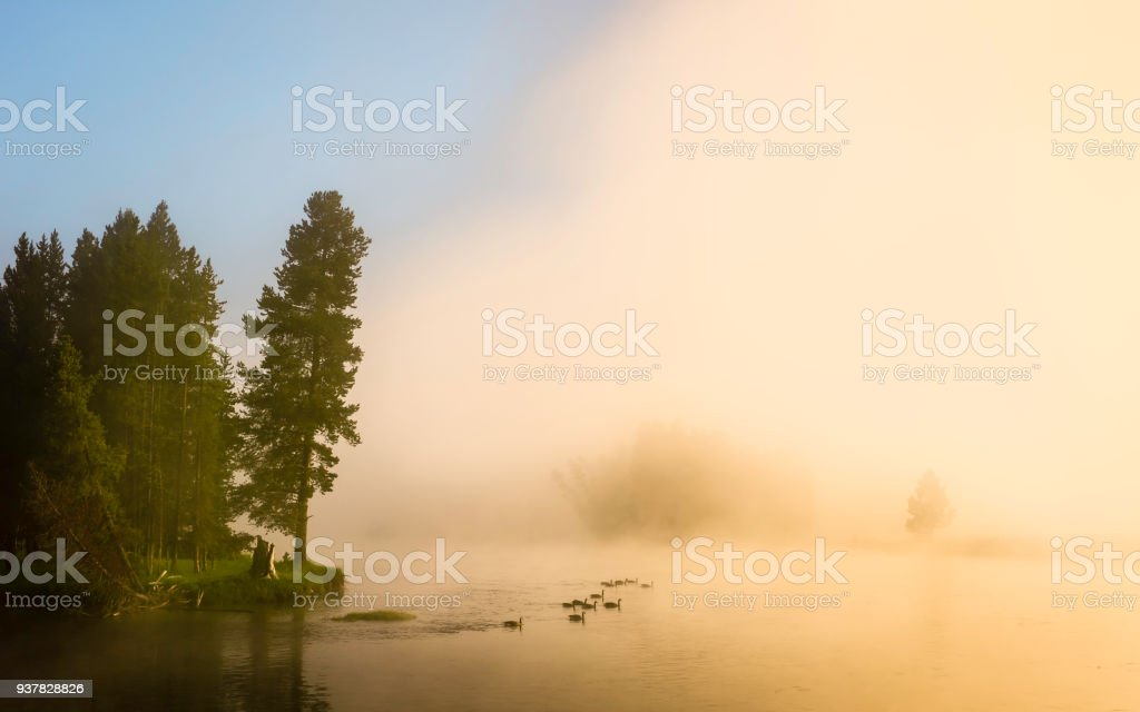 Dawn mist and wild geese over Yellowstone River, Montana, USA. stock photo