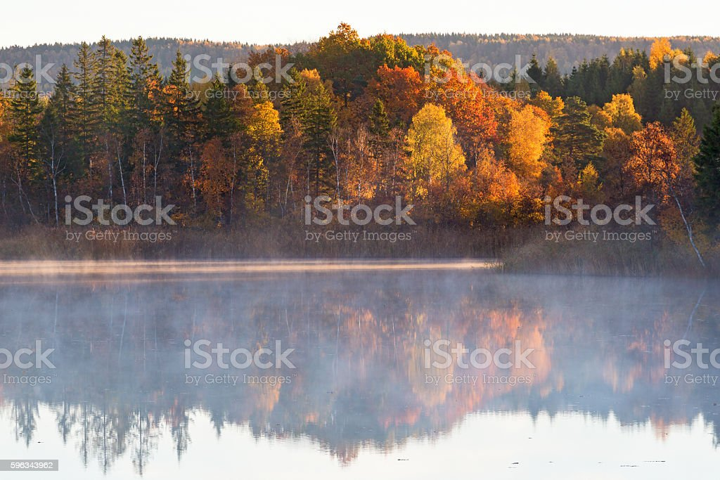 Dawn mist on the lake with forest in autumn colors royalty-free stock photo