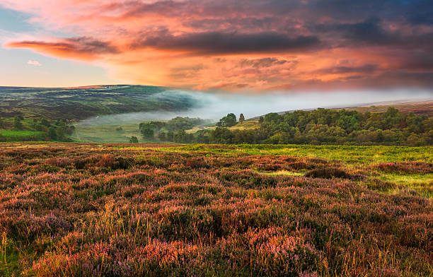Dawn mist over the North York Moors, Yorkshire, UK. Dawn mist over the North York Moors national park shot in autumn (fall) when the heather is in full bloom near the village of Goathland, north Yorkshire, UK. moor stock pictures, royalty-free photos & images