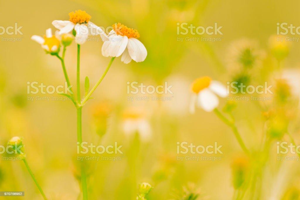 Dawn An Die Frische Luft Und Die Schönheit Der Blumen Für