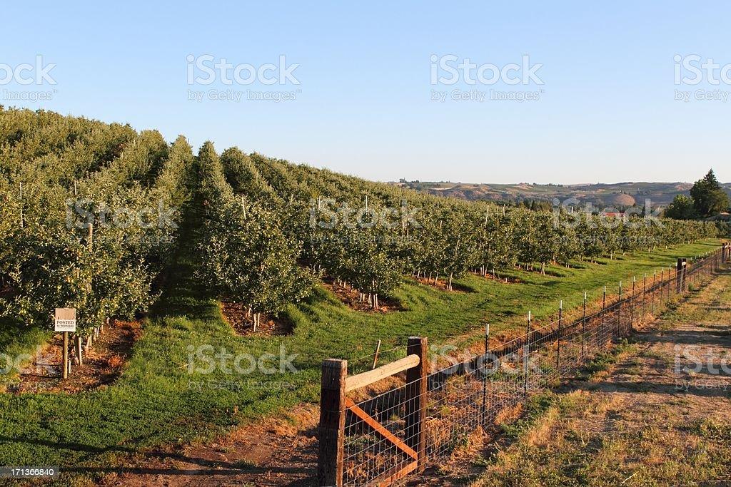 Morgendämmerung auf einer farm – Foto