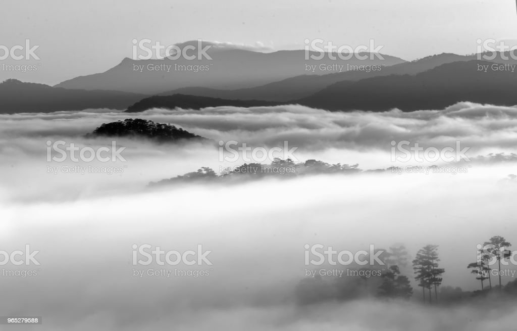 Dawn on the plateau pine forests royalty-free stock photo