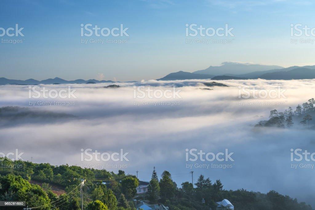 Dawn on the plateau pine forests zbiór zdjęć royalty-free