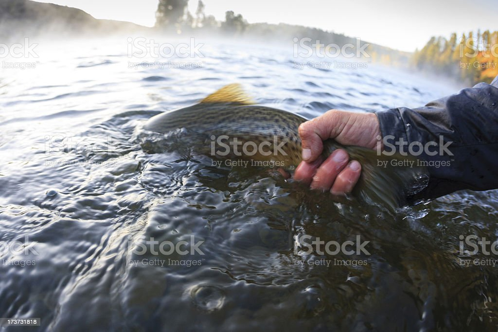 Dawn Release royalty-free stock photo