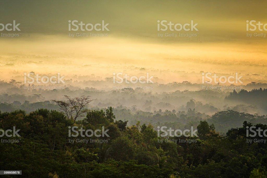 Dawn stillness over misty Javanese jungle stock photo