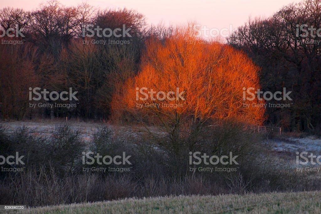 Dawn with its beautiful sheen stock photo