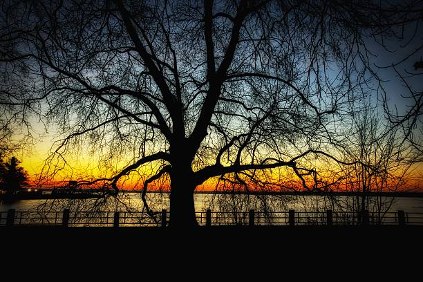 Dawn2 stock photo