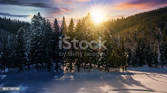 1074120624 istock photo day and night concept in winter spruce forest 855736246