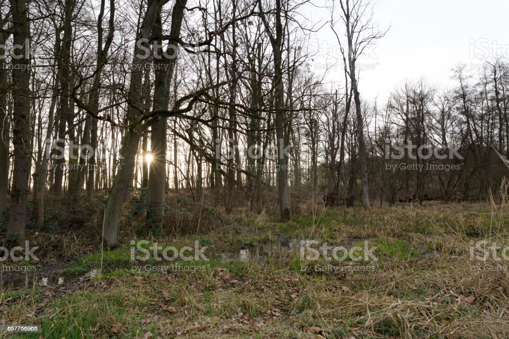 Day ends at Nature Reserve / Germany stock photo