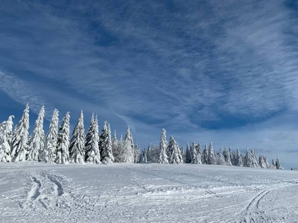 Cтоковое фото day in high mountains in Krkonose, trees covered with white fluffy snow against the winter landscape.