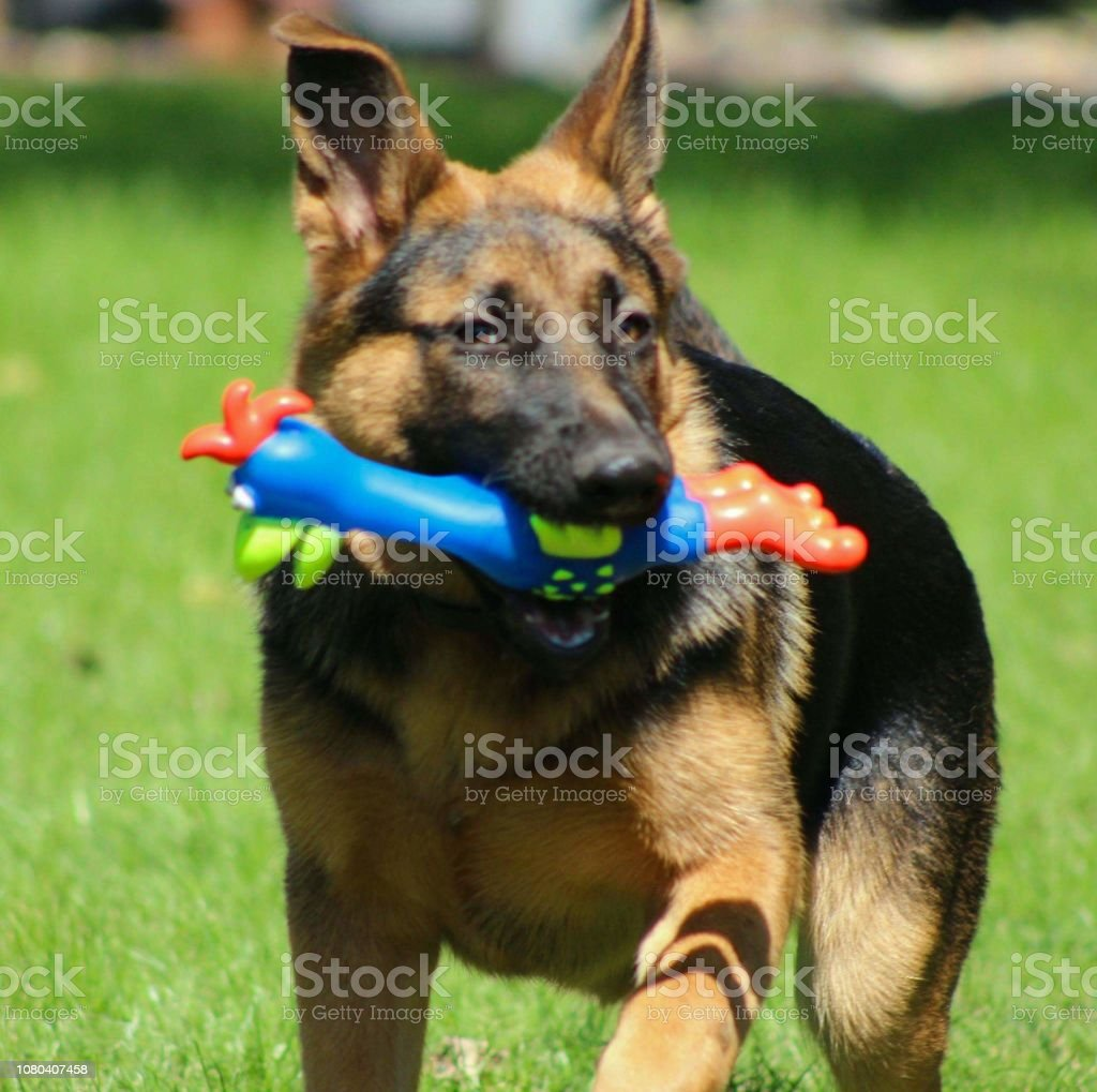A Day In The Life Of A Dogs World Stock Photo & More Pictures of