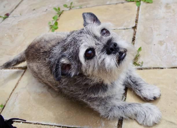 un día en la vida de un perro de la tercera edad - dog fotografías e imágenes de stock