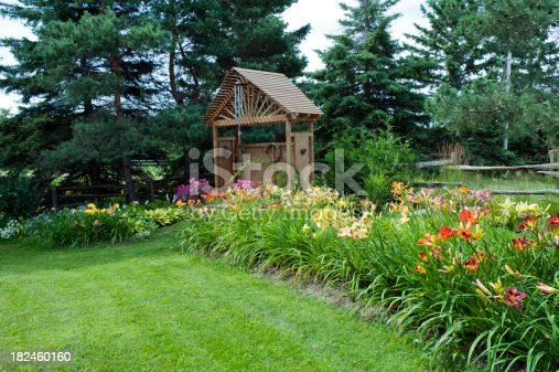 A large bed of day lilies in a country garden.