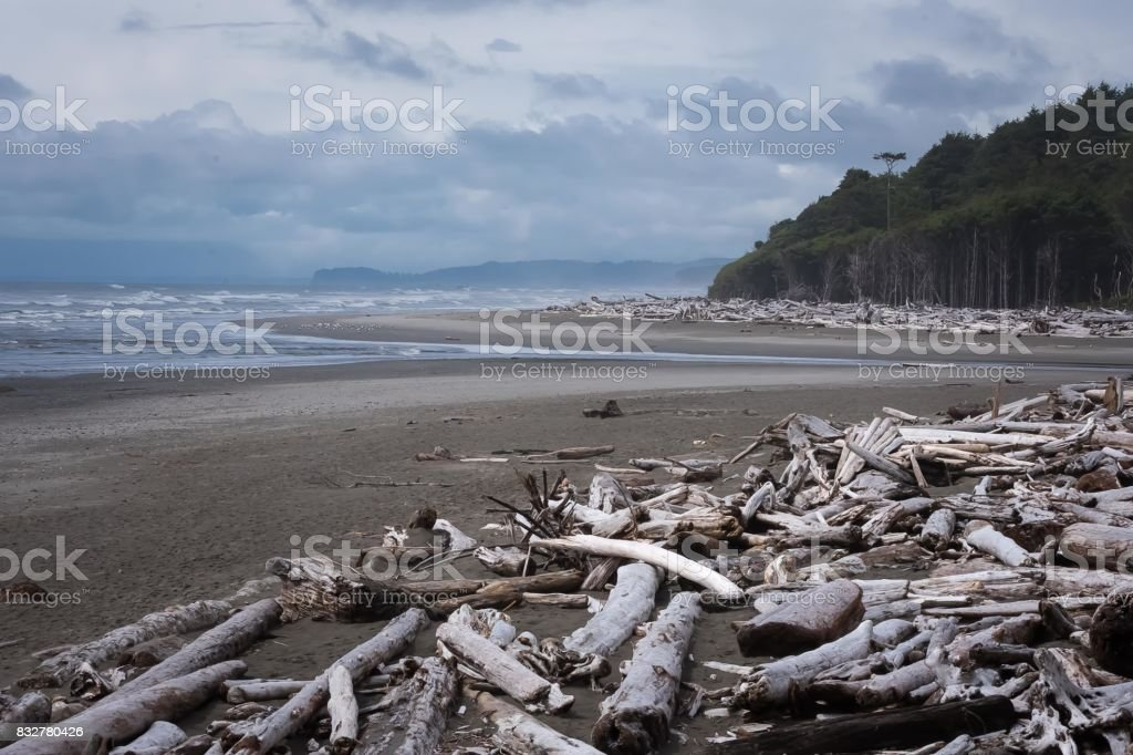 A day on the beach in Forks, Washington stock photo