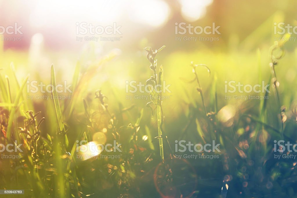 Daylight stock photo