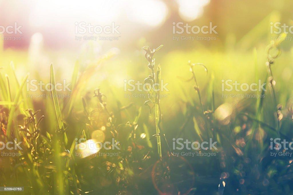 Daylight stock photo