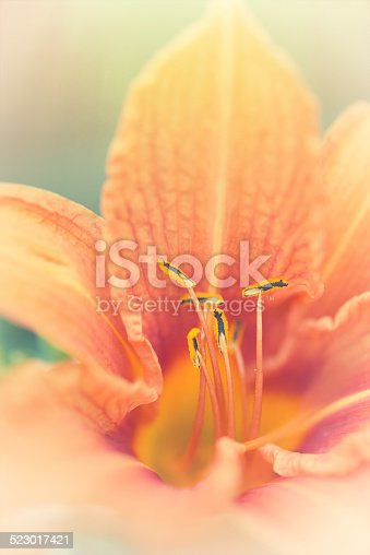 Vertical image of Daylilly flower.  Shallow depth of field.