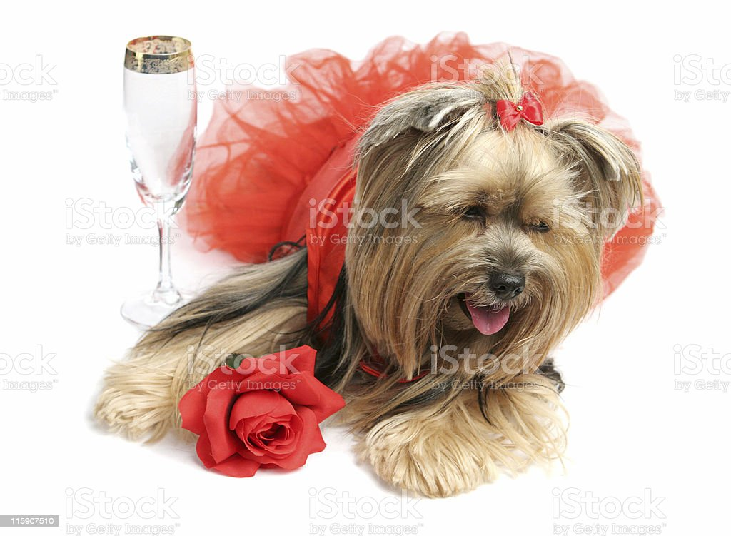 Days of Wine & Roses royalty-free stock photo