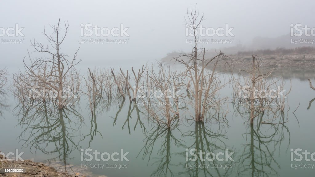 Daytime Fog Over Large Lake and White Trees in the Foreground stock photo