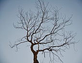 Dead and bare trees with sky background photo