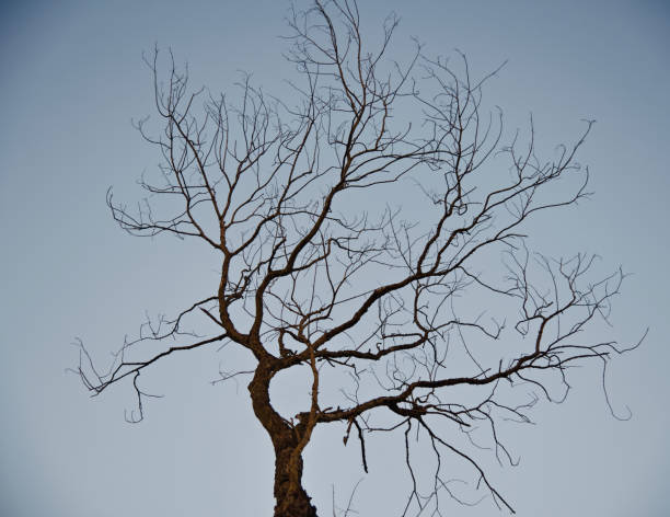 Dead and bare trees with sky background photo stock photo