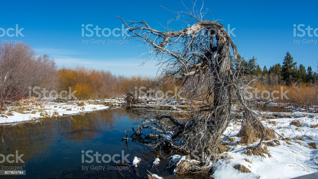 Dead and contorted tree by Taylor Creek near South Lake Tahoe stock photo