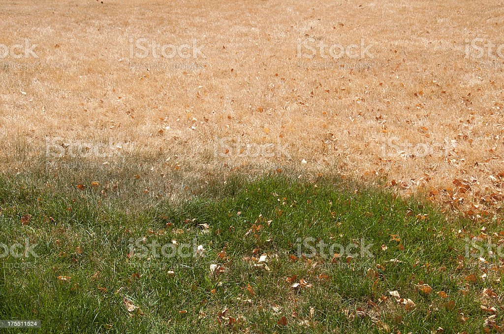 Dead and Green Grass stock photo