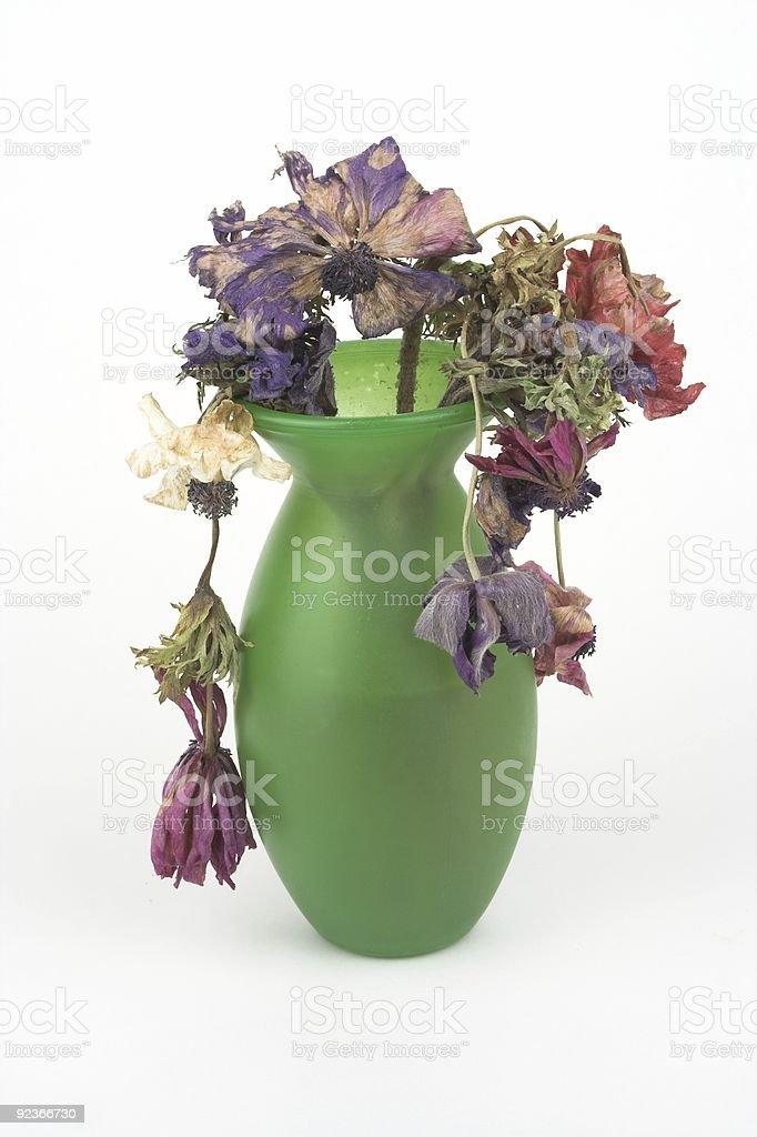 Dead Anemones royalty-free stock photo