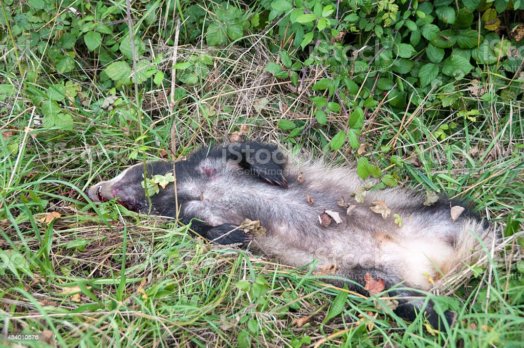 Dead Animal By The Roadside stock photo