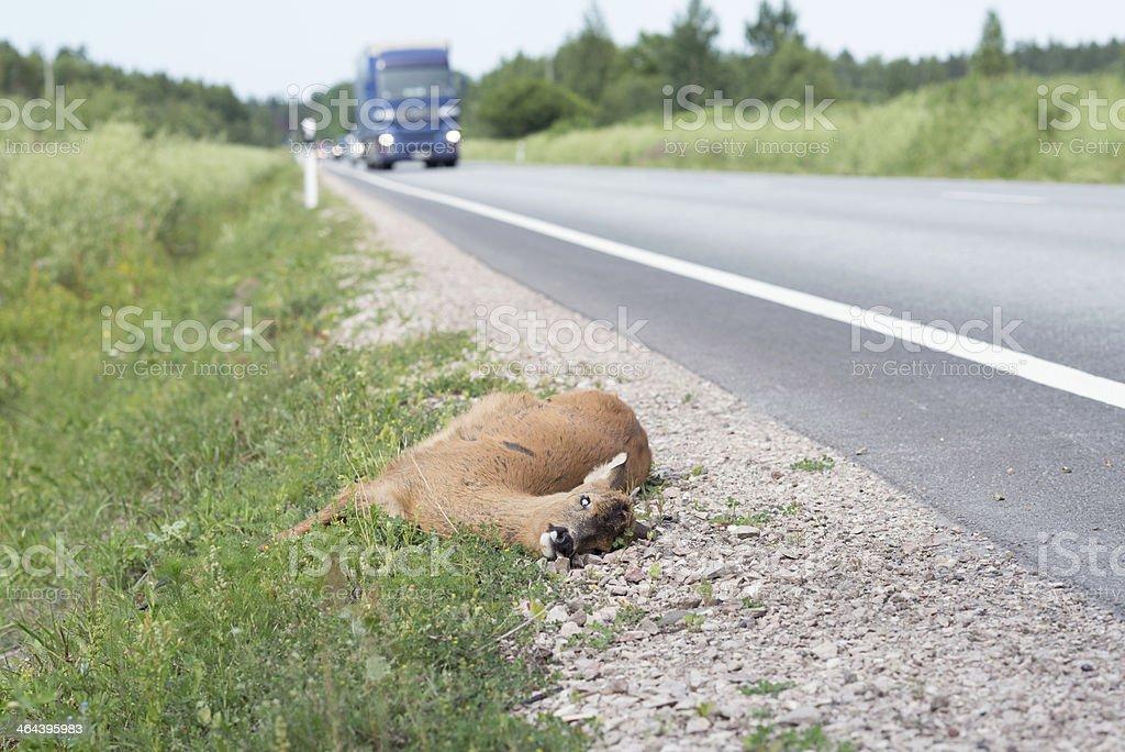 Dead Animal royalty-free stock photo