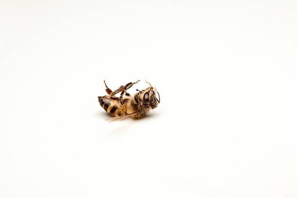 Dead Biene – Foto