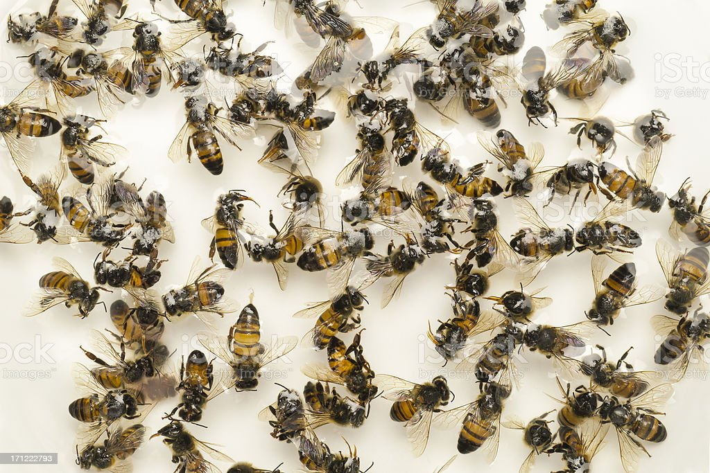 Dead Bees Colony Collapse Disorder stock photo
