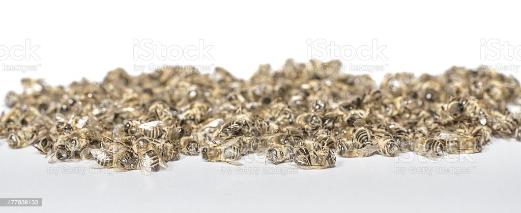 dead bees royalty-free stock photo
