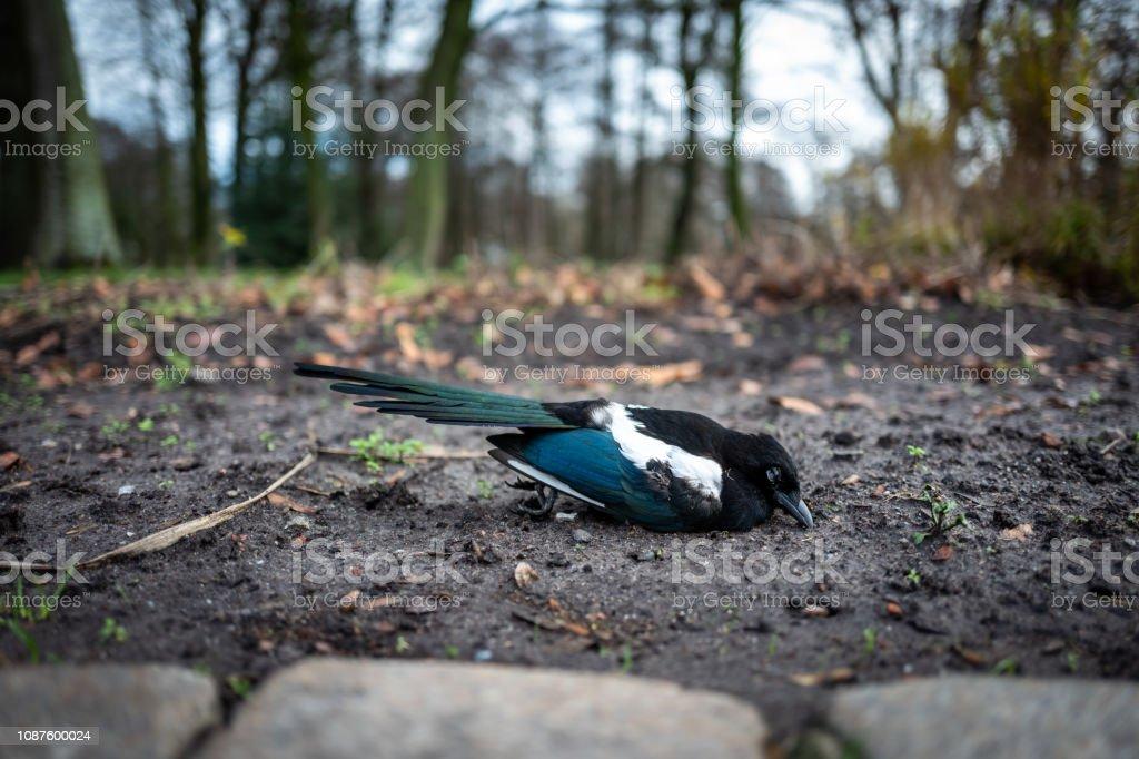Toten Vogel in Wilhelmshaven, Deutschland. – Foto