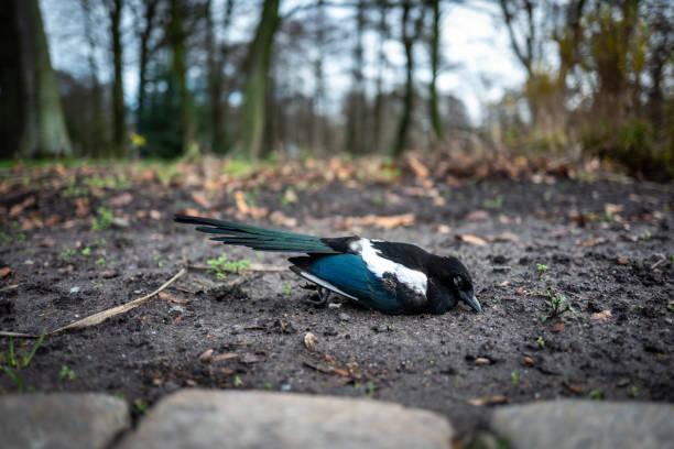 Dead bird in Wilhelmshaven, Germany. stock photo