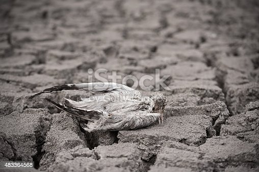 istock Dead bird on dry ground. 483364568