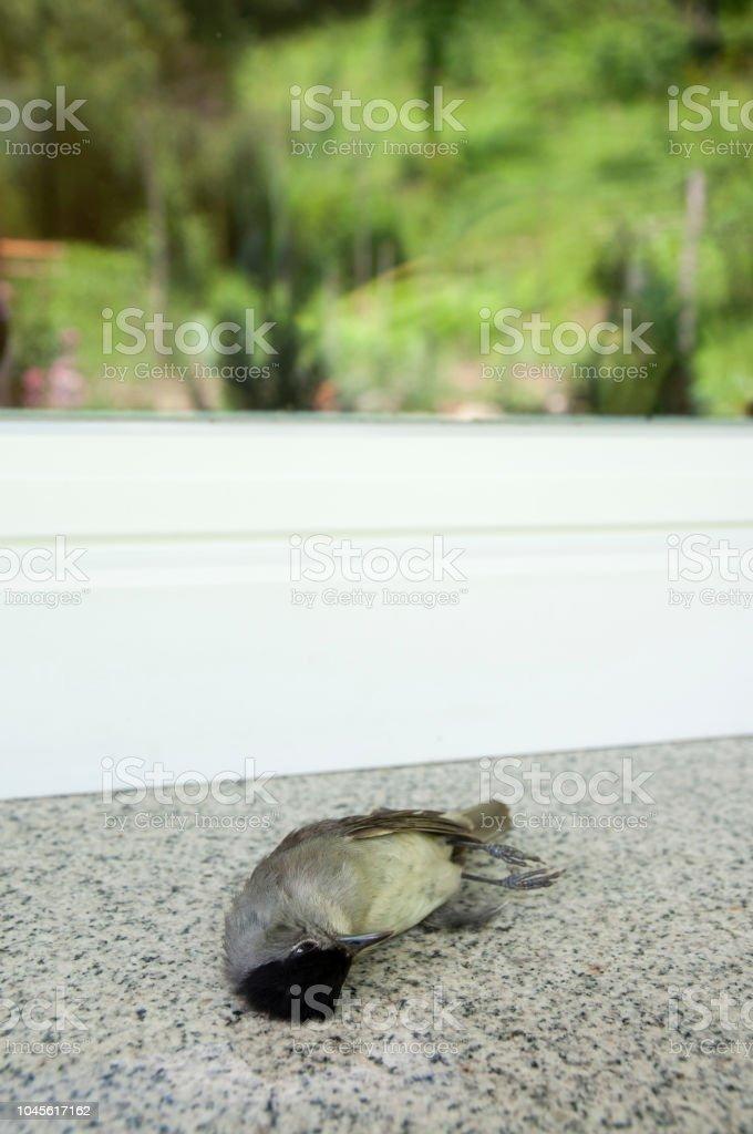 dead bird (young woodpecker) stock photo