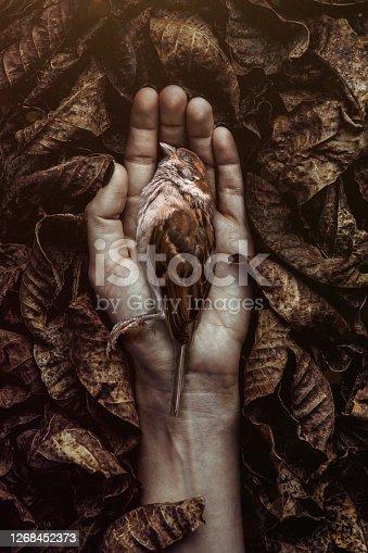 istock Dead bird 1268452373