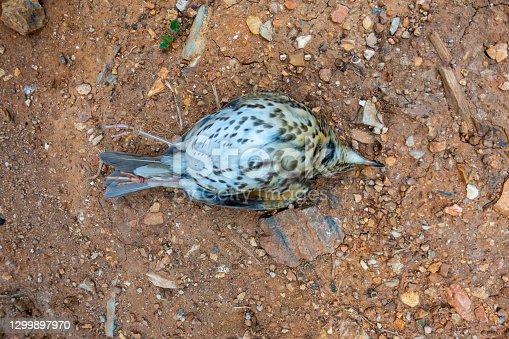istock Dead bird 1299897970