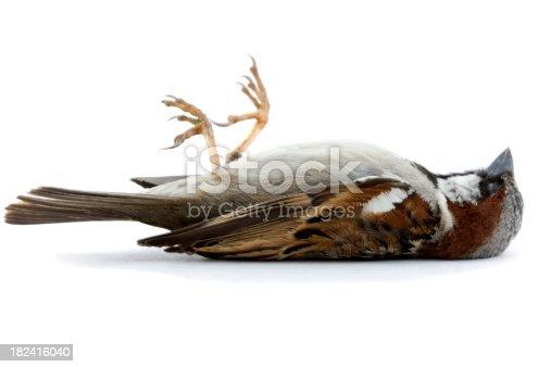 istock Dead Bird 182416040