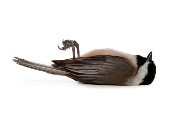 Dead Bird – Foto